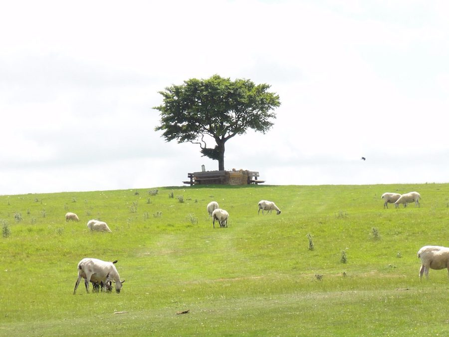 The Memory Tree on Cleeve Hill